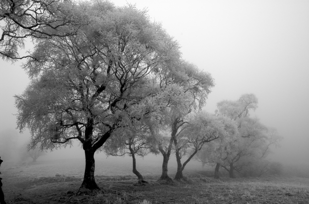 winter-trees