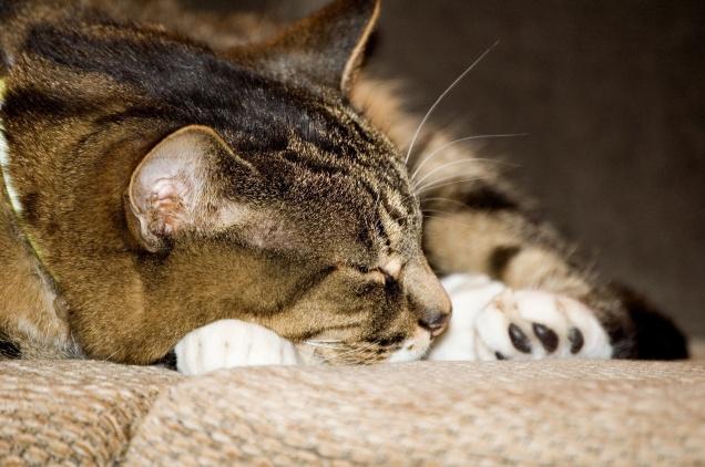 Simba Asleep