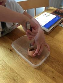 eggsperiment step2
